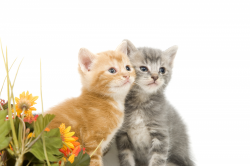 bigstock_Two_Kittens_And_Flowers_2730273_1.jpg